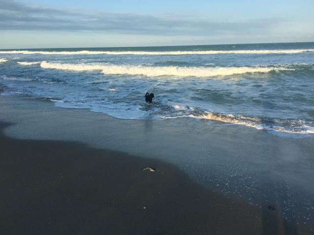 Walton Rocks Dog Park in Jenson Beach- great spot to romp in the Atlantic Ocean