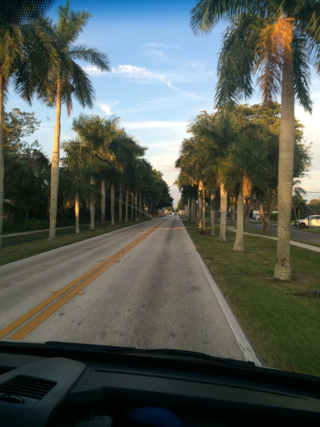 Palm tree lined streets in Fort Myers.